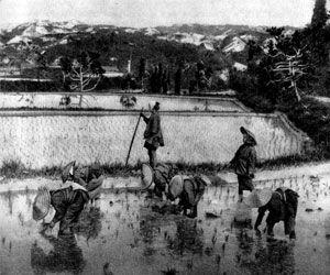 Аграрная реформа в Китае: основополагающие принципы и достигнутые результаты